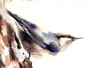 Watercolor Print of Nuthatch Bird, Watercolor Painting Art Print, Bird Wall Art
