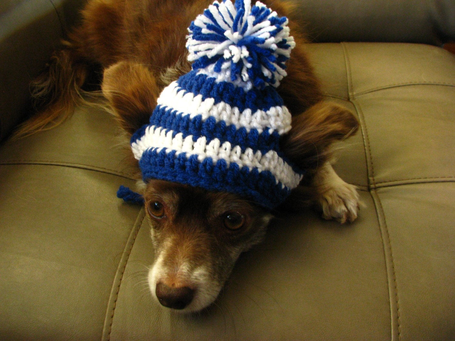 Crochet Pattern For Dog Hat With Ear Holes : Small Dog Crochet Beanie UK Wildcats Dog Hat Blue and White