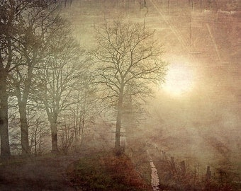 Fog, Photography, Fine Art Photograpy, Autumn, Winter, Nature, Trees, Forest,, Skeeter, Landscape,Photo Art, hologram,  Sandra Röken,