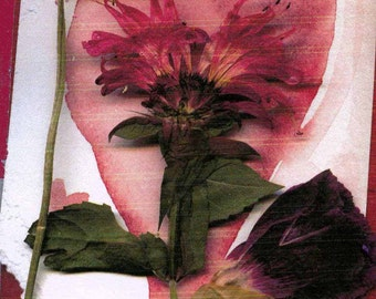 Collage, pressed flower card with bee balm, clover and rose petal, heart watercolor, print from original
