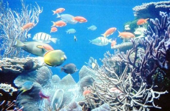 Photograph Hawaii Exotic Tropical Fish