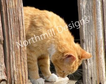 Barn Cat 2,  8 x 10 Limited Edition Print