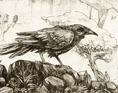 The Seven Ravens | original etching print
