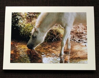 Greetings Card: Take a horse to water