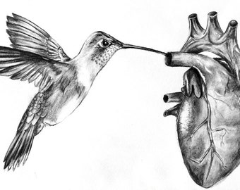 Digital Giclee Drawing Art Print / Humming Bird Anatomical Heart  / 8 x 12 Charcoal / Wall Art Decor