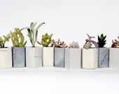 Mini Concrete Geo Planters || Set of Six