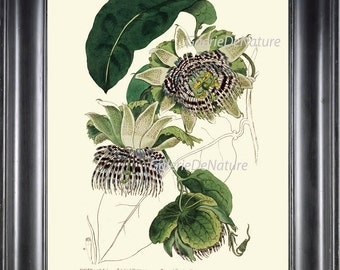 BOTANICAL PRINT Art ED2 Beautiful Passion Flower Plant Antique Tropical Spring Summer Garden Illustration to Frame Home Wall Room to Frame