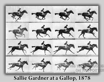 24x36 Poster; Sallie Gardner At A Gallop Eadweard Muybridge 1878