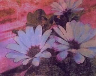 Floral Wall Art, Osteospermum Blue, Original Photo Transfer, Size: 8.5 x 11