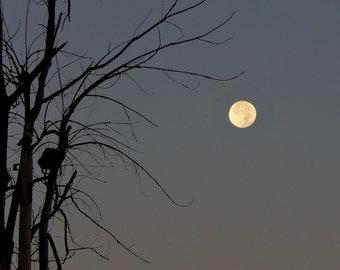 Moon tree (Landscape, Nature, Moon, Fine Art Photography)