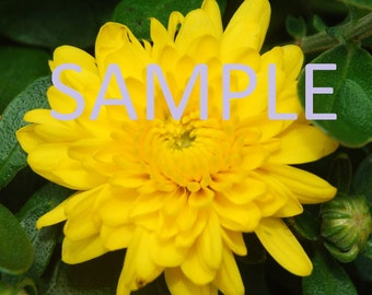 Set of 12 Yellow flower photograph stationery note card (with envelope)