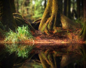 Magical Forest Reflection - Photograph on Metal