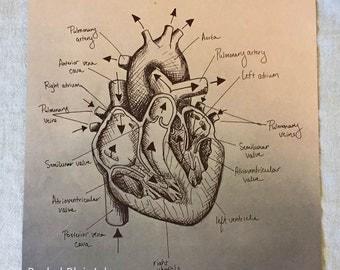 Heart Anatomy - Original Print