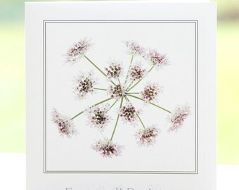 Pink Cow Parsley flower photograph, blank inside, square greetings card