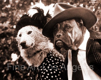 Photo of Dressed Up Dogs!