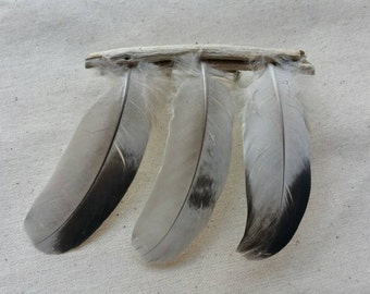 Nature Brooch - Feather Magick