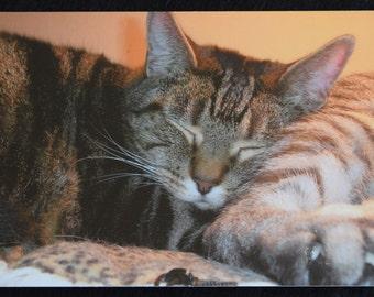 Kitty Cat Sleeping Postcard
