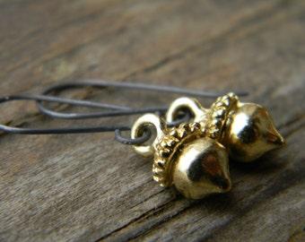 SALE - golden acorn earrings - blackened silver earwires