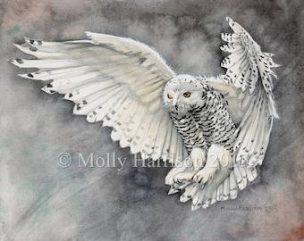 Snowy Owl Wildlife Watercolor Fine Art Print by Molly Harrison 8 x 10
