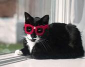 Nerd Glasses for Cats - Kitty Poindexter **NEW DESIGN**