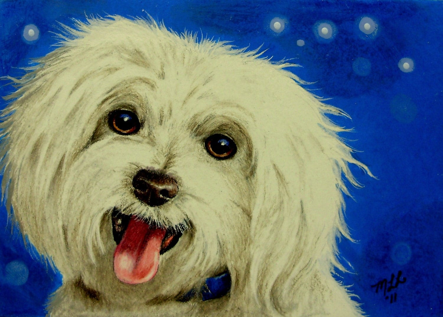 maltese painting maltese dog art by melody lea lamb aceo print 302 2093