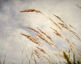 Golden Grains, Co. Waterford, IRELAND, Nature Photography, Blue Sky, Wheat Field, Summer Grass, Copper Coast, Bunmahon, Irish Flowers, Seeds