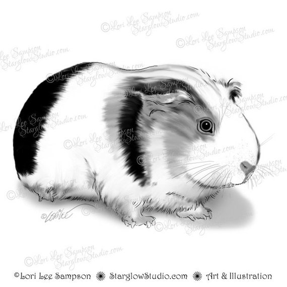 Guinea Pig Digital Clip Art | Digital Stamp | Digital Download ...