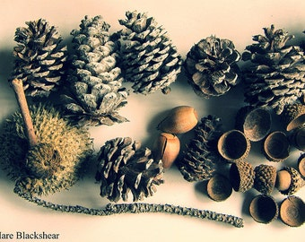 Forest Finds - Nature Gifts Photograph