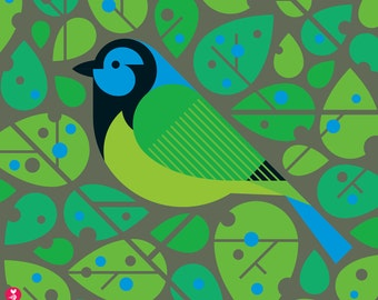 green jay limited edition print