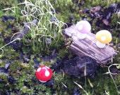 Tiny Mushrooms - Terrarium Supplies - Set of 10