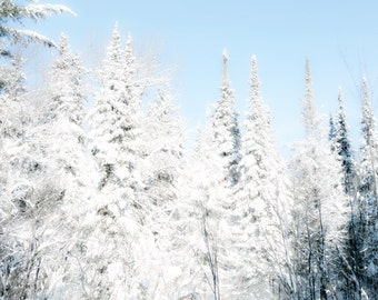 Powder blue winter photography fir trees winter white pale blue neutrals fairytale woodland forest - Powder 8x12