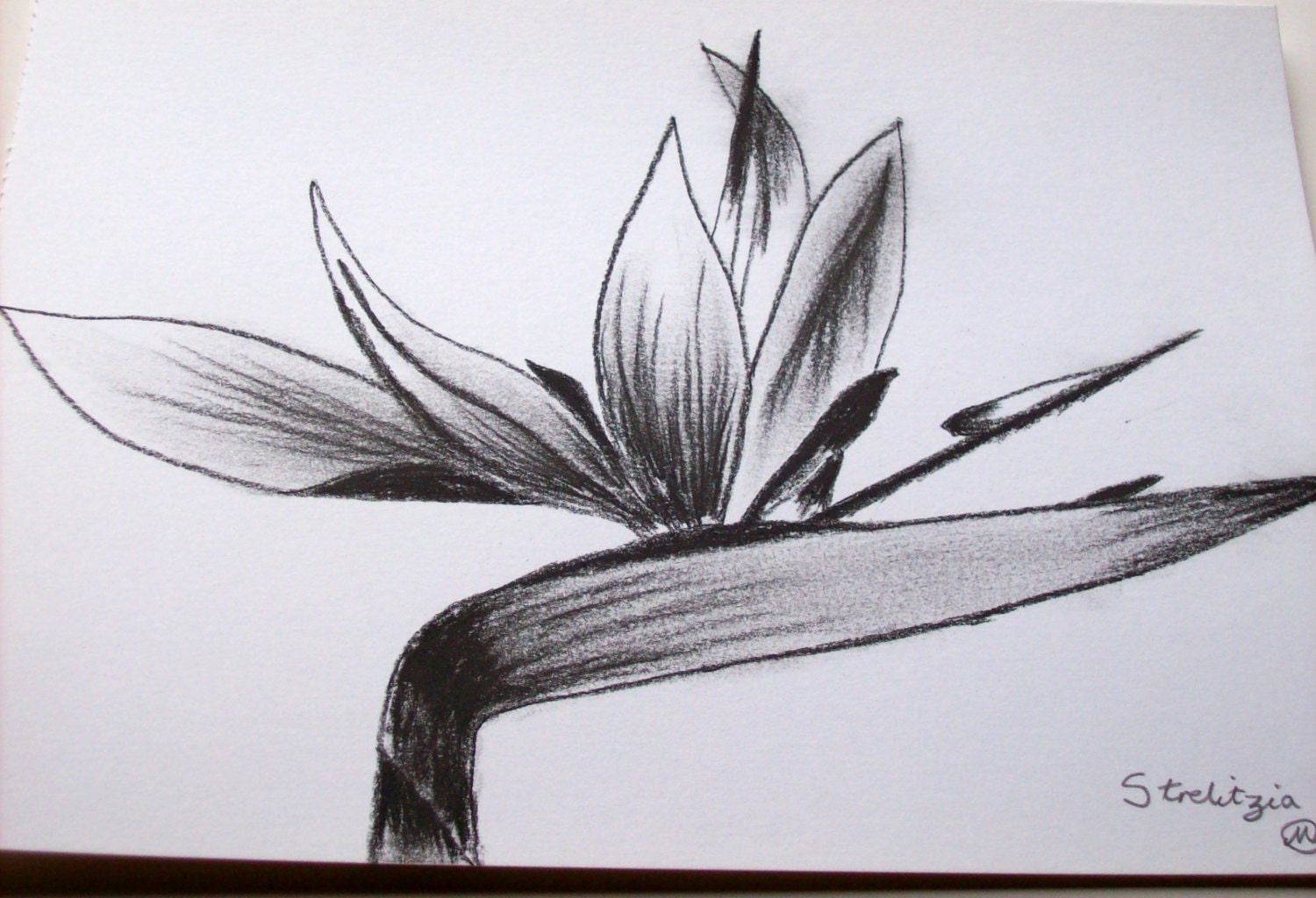 It is a picture of Selective Bird Of Paradise Drawing