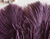 DELICATA OSTRICH PLUMES  , Fig Purple / 2024 / Best Seller