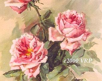 Victorian Pink Cabbage Roses, Art Print, Half Yard Long, Home Decor