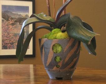 Sumatra Orchid Pot