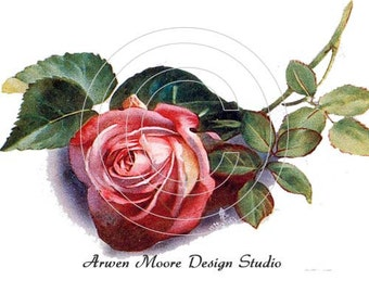 Shabby Vintage Chic Victorian Red Single Rose Digital Download Images - de-ro-139