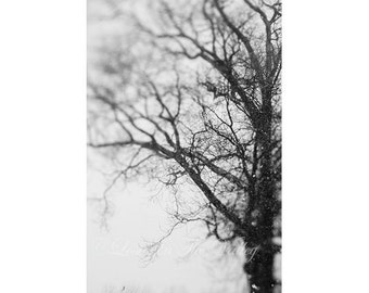 Winter Photograph, Rustic Wall Decor, Tree Photo, Fine Art Photography, Woodland Print, Lensbaby, Black and White, Grey, Photo of Branches