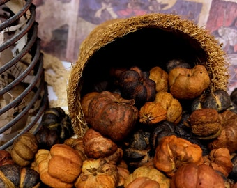 Natural & Black Halloween Fall Bowl Fillers Putka Pods 4 FULL Cups Craft Elements Mini Pumpkins - FREE Shipping in USA