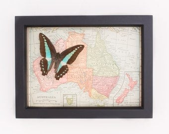 Vintage Map of Australia with framed native butterfly