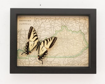 Old Framed Map of Kentucky with real native butterfly