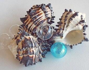 BLACK MUREX SHELL, beach decor, wedding decor, coastal, nautical, specimen shell, supplies for crafting