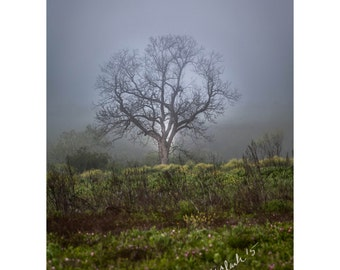 Faerie Spring Fine Art Photography Dreamy Foggy Magical Tree in the Fog Woodland Spirits Natural beauty Mystical Green beauty Fairy tale