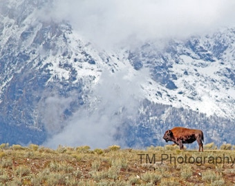 Grand Tetons - Buffalo and Mountains -Lone Bison -Grand Teton National Park Buffalo - Mountains - Teton National Park - Fine Art Photography