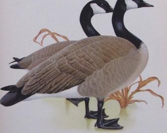 canada goose importatore italia