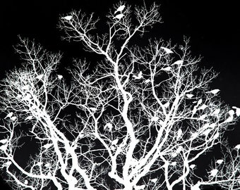 Bird Tree Photograph - Black and White Photography - Silhouette Art - Woodland Fairy Tale Art - Nursery Art - Dramatic Elegant Art Print