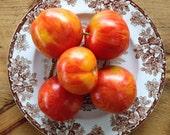 Red Zebra Stripe Tomato Seeds