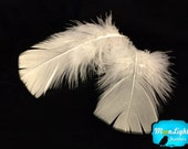Turkey Feathers, 1 Pack - IVORY Turkey T-Base Plumage Feathers 0.5 oz. : 172