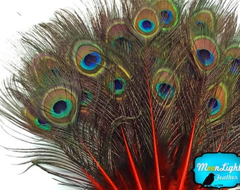 USA Peacock Feathers,10 Pieces - RED MINI Natural Peacock Tail Body feathers with Eyes : 3644