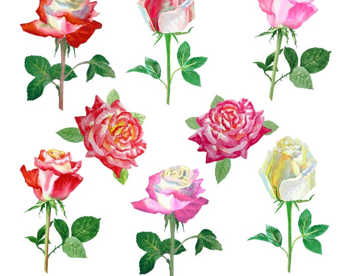 Watercolor clipart with rose, watercolor clip art , wedding, mothers day, 8 march, spring, cards, flower, floral, bouquet