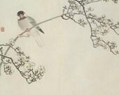Java Sparrow & Plum Branch, Japanese Bird/Flower Book Plate 3, Natural History, 1978, 8 x 11, Nature Art, Chic Decor, Koyo